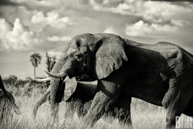 photographer_commercial_brianbraun_africa_blog-10