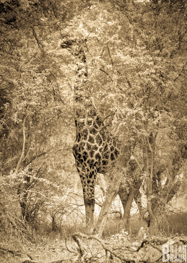 photographer_commercial_brianbraun_africa_blog-2-6