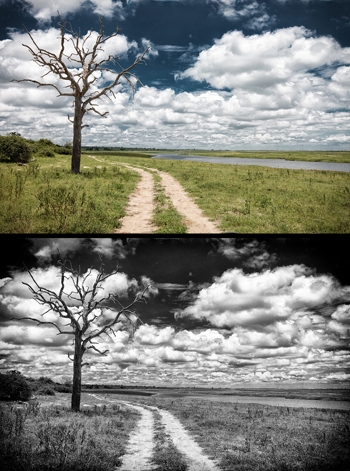 Brian braun africa photography tree color vs black and white